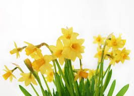Happy Easter to all our Guilders and Friends!